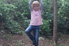 Der Baum im Yogawald